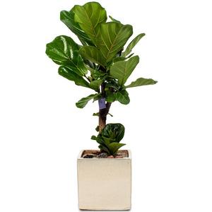 떡갈나무(소형)