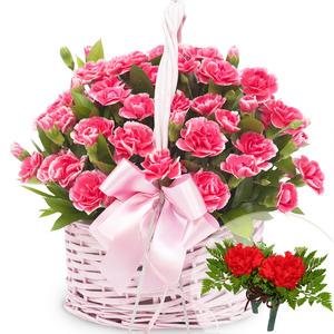 카네이션바구니(꽃행복340호+코사지2개)