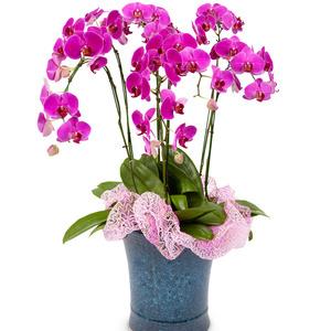 호접란과 공기정화식물