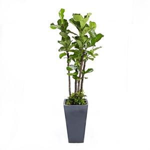 떡갈나무(사각)-인기상품